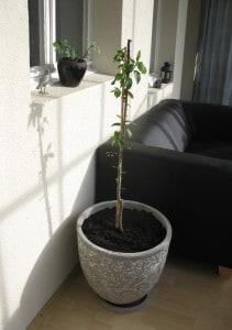 Baum gepflanzt.