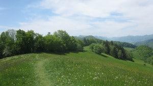 Panorama 300x170
