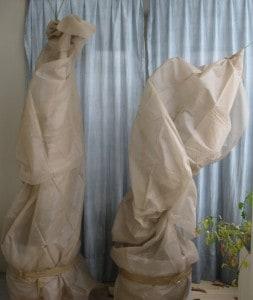 Unsere gut verkleideten Bäumchen gegossen