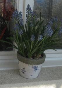 ... und ein Frühlings-Blüemli auf den Fenstersims stellen.