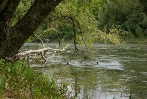 Baum im Wasser 2 300x201