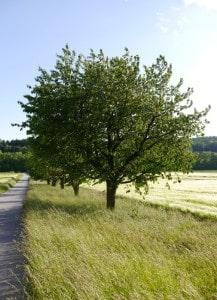 Epischer Baum.