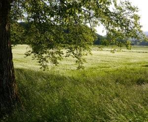 Episches Weizenfeld.