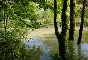 Episches (aber harmloses) Hochwasser.