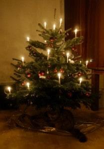 Weihnachtsbaum mit Kater 209x300