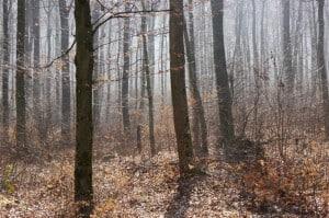 Müschteriöser Wald.