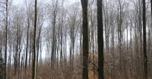Lauter Bäume.