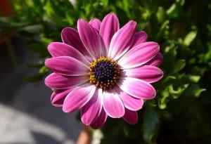 Flower-Power.