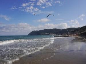 Strand mit Möwen 300x225